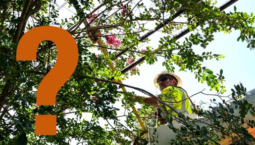 Tree Pruning & Trimming FAQ