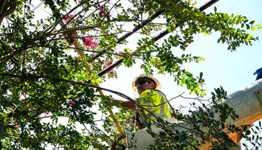 Tree Pruning & Trimming
